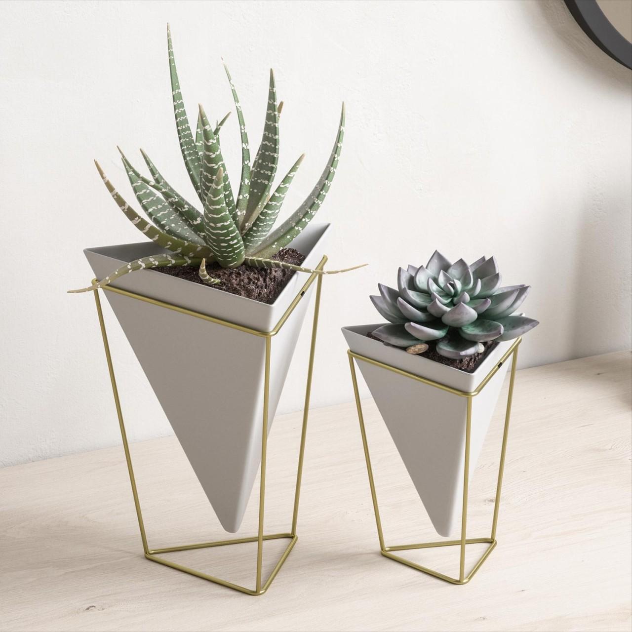 Designvasen für Succulenten und Kakteen